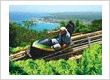 Bobsled Ride in the hills overlooking the Ocho Rios bay