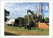 Annual Tree Maintenance