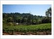 Sherwin Family Vineyards