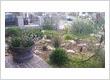Garden Landscaper Sydney