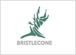 Bristlecone Construction