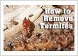 termite removal Perth