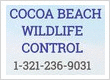 Cape Canaveral Squirrel Removal