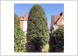Hedge Trimming Services in Surrey