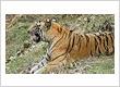 Odisha Wildlife Tours