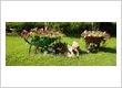 Gardeners Chigwell