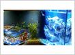 Bear Glass Fish-tank