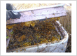 Bee Removal West Palm Beach