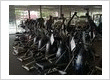 Flaman Fitness Richmond
