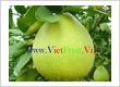 Long Vinh Phat Co., Ltd - VietFruit.Vn
