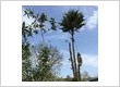 Tree Felling Services in Surrey