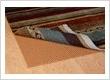 Shenasi Carpet