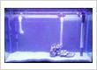 Merie Aquarium