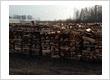 Oak or Ash Fire Wood