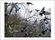 Bird Control Gurgaon
