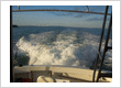 Sunfish Charters Ltd.