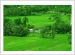 Green ricefield near Prambanan area