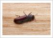 Pest Control Whittier California