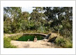 Natural pools are making a come back US - ECOlibrium Landscape
