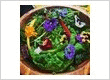 Appetite Catering Dublin Mixed Irish Leaves with Nasturtiums