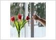 Tilt-and-Turn-Window-Flowers