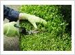 Gardeners Dagenham