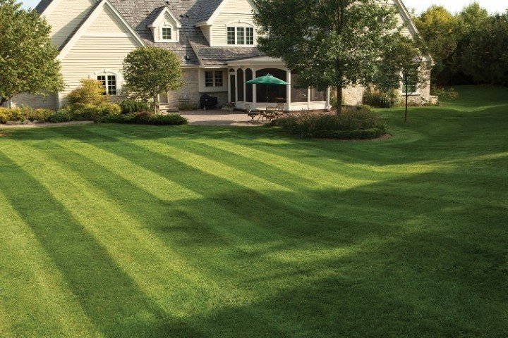 the parable of the green lawn And he commanded them all to sit down by groups on the green grass grass » on roofs of houses psalm 129:6 verse concepts like grass housetops grass.