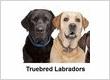 Truebred Labradors
