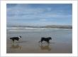 Beach St Animotels
