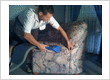 Zarz Carpet Cleaning