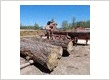 Woodmizer Custom Saw Milling