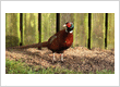 WILD BIRD FOOD SHOP NORTHERN IRELAND