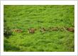 Running deers at Bluran National Park, East Java
