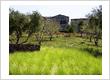 Flora Terra Landscape Management