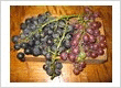 Grow your own grapes,