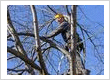 Milton Tree Care