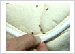 bed bug control gurgaon