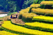 3-DAY ADVENTURE MOUNTAINOUS TOUR (HANOI / DUONG LAM ANCIENT VILLAGE / REMOTE AREA OF MU CANG CHAI / SAPA