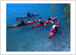 Sea Adventures - guided sea kayak tours