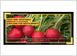 Fruit And Vegetable Suppliers For Restaurants