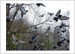 Bird Control Gurgaon
