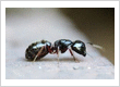 Residential Pest Control Whittier CA