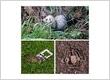AAA Animal Wild Removal Inc-Cape Coral