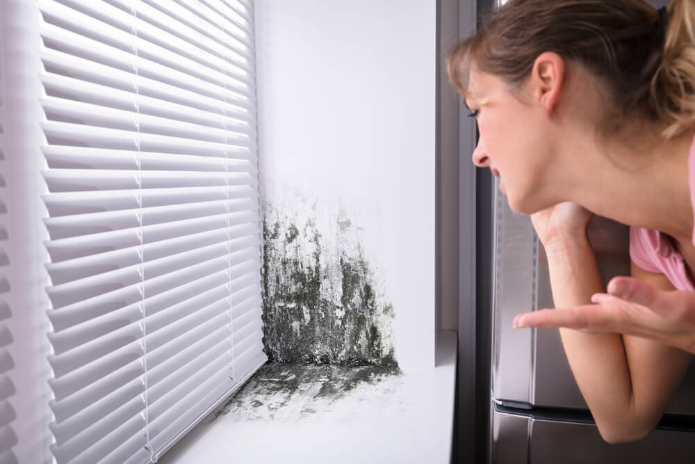 Insurance Claim Tips for Mold Damage: How to Maximize a Mold Damage Payout