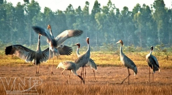 Tram Chim National Park – a green island of red-headed cranes